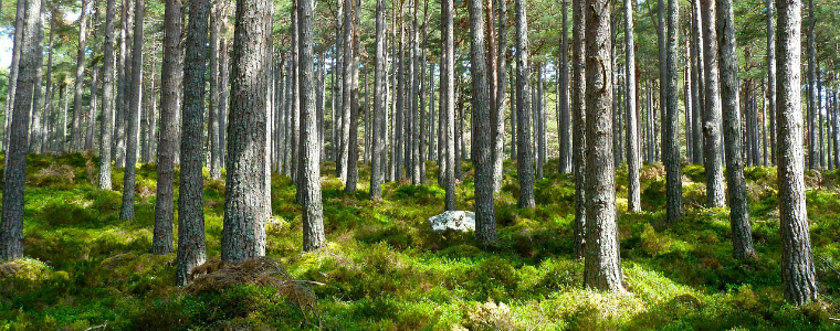 medio-ambiente-liberacion2000-bosque-recurso-cc