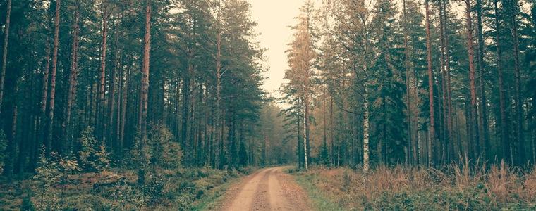 naturaleza-recurso-bosque-dia-mundial-medio-ambiente-sanse-liberacion2000